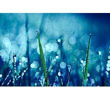 réveil 03 Photographic Print