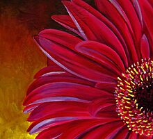 Glowing Gerbera by tiffanybudd