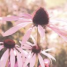 purple coneflowers by Iris Lehnhardt
