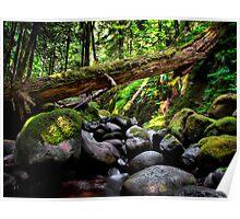 In The Shadows ~ Oregon Cascades ~ Poster