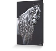Andalusier - Andalusian Horse Greeting Card