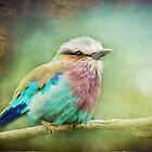Lilac Breasted Roller by polly470