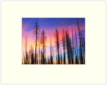 Whispering Pines by rocamiadesign