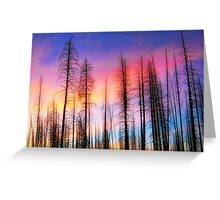 Whispering Pines Greeting Card