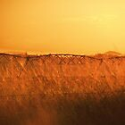 Golden – Gatton QLD by MiloAddict
