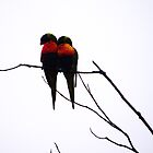 Love Birds – Noosa QLD by MiloAddict