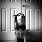 In front of the door by d4dogphoto
