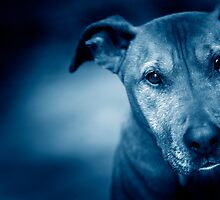 Nash Blue by d4dogphoto
