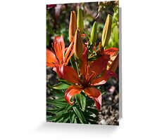 Lily 10 Greeting Card