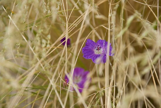 Flower hidden in the hay by Georgia Conroy