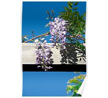 Over hanging flowers Poster