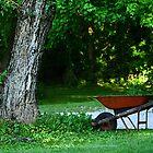 Summer in my yard by Susan Blevins