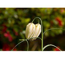 Flower 67 Photographic Print