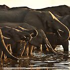 Elephants at the Chobe River, Botswana by Brian Healy Photography