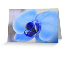 Blue Orchid, As Is Greeting Card