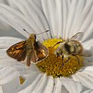 Skipper and Bumblebee Sharing  by David Friederich