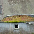 Barn in ruins. by Fara