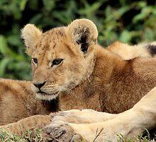 Africa Continues - Cute n Cuddly by Sally Haldane