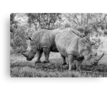 Rhinos Canvas Print