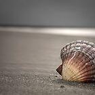 Seashell  by shuttersuze75