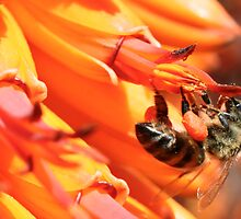Besige by – Busy as a bee can be by Rina Greeff