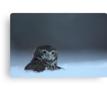 Pygmy Owl Canvas Print