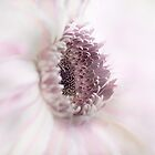 Soft Pink &quot;Gerbera&quot; by Toni McPherson