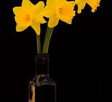 Daffodils 2 by Werner Padarin