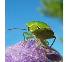 Stinkin Bug..... Photographic Print