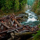 The Big Log Jam by Charles &amp; Patricia   Harkins ~ Picture Oregon