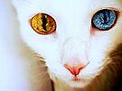 Alienus Felinea  by Scott Mitchell