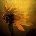 The Sun Worshiper by Christine Annas