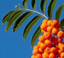 Orange tabs by ilkka