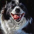 smile! by carol brandt