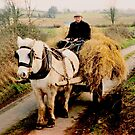 Bringing Home the Hay, Ireland. by JoeTravers