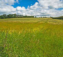 Landscape, ripening field of barley, Brydekirk, Scotland by Hugh McKean