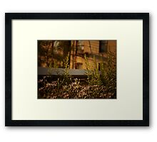 The Fragility of Summer Framed Print