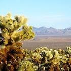 Cactus - Joshua Tree National Park by VioletHalo