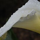 Raindrop Lily Cup by Lozzar Flowers & Art