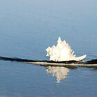 Lone shell by beachbumma
