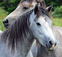 Best Friends - Connemara Ponies by ConnemaraPony