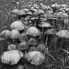 Wild Mushrooms by James Taylor