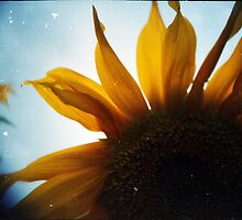 LC-A+ loves Sunflowers by Dominique Musorrafiti