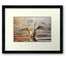 Swanset Framed Print