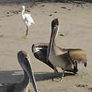 Pelicans and a Heron by Bernhard Matejka