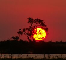 Sun going down . Chobe River by Mark Braham