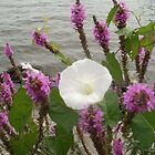 Glory amongst the Purple at the Lake: (Ipomoea lacunosa) by linmarie