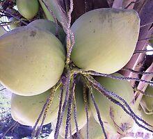 Wood Creeper in Coconut Palm, Mexico: photo by Lynda Earley