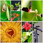Little things of nature by Melania