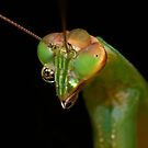 Mantis Monocles ! by robkal